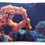 regeneraciya-kletok-organizma